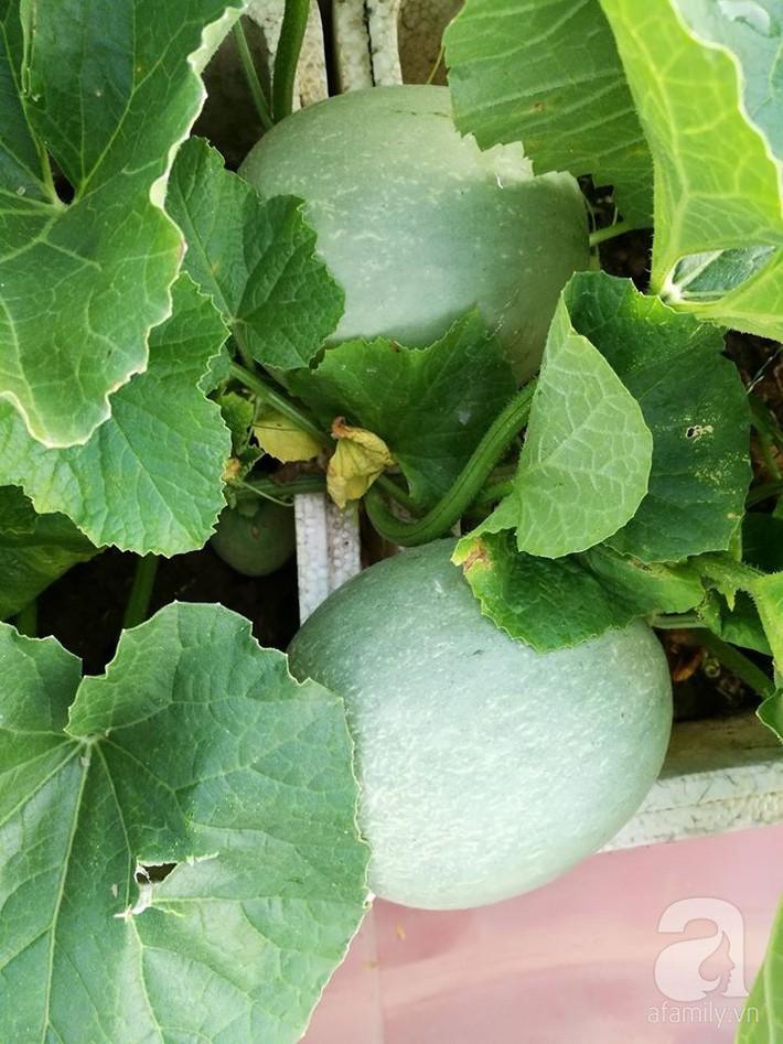 Mẹ đảm ở Hà Nội chia sẻ 12 năm kinh nghiệm trồng rau quả sạch như trang trại trên sân thượng  - Ảnh 16.