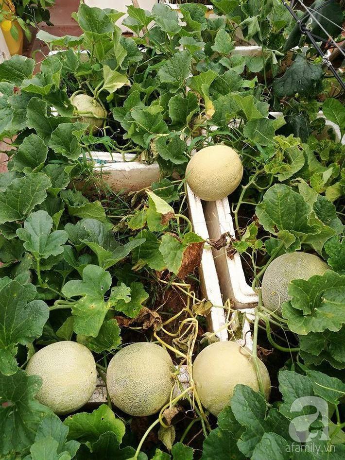 Mẹ đảm ở Hà Nội chia sẻ 12 năm kinh nghiệm trồng rau quả sạch như trang trại trên sân thượng  - Ảnh 15.