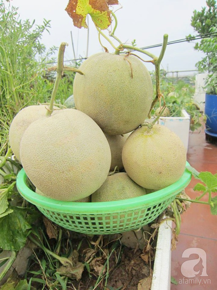 Mẹ đảm ở Hà Nội chia sẻ 12 năm kinh nghiệm trồng rau quả sạch như trang trại trên sân thượng  - Ảnh 13.