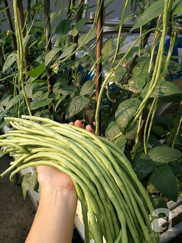 Mẹ đảm ở Hà Nội chia sẻ 12 năm kinh nghiệm trồng rau quả sạch như trang trại trên sân thượng  - Ảnh 4.