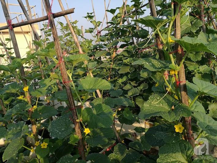 Mẹ đảm ở Hà Nội chia sẻ 12 năm kinh nghiệm trồng rau quả sạch như trang trại trên sân thượng  - Ảnh 10.