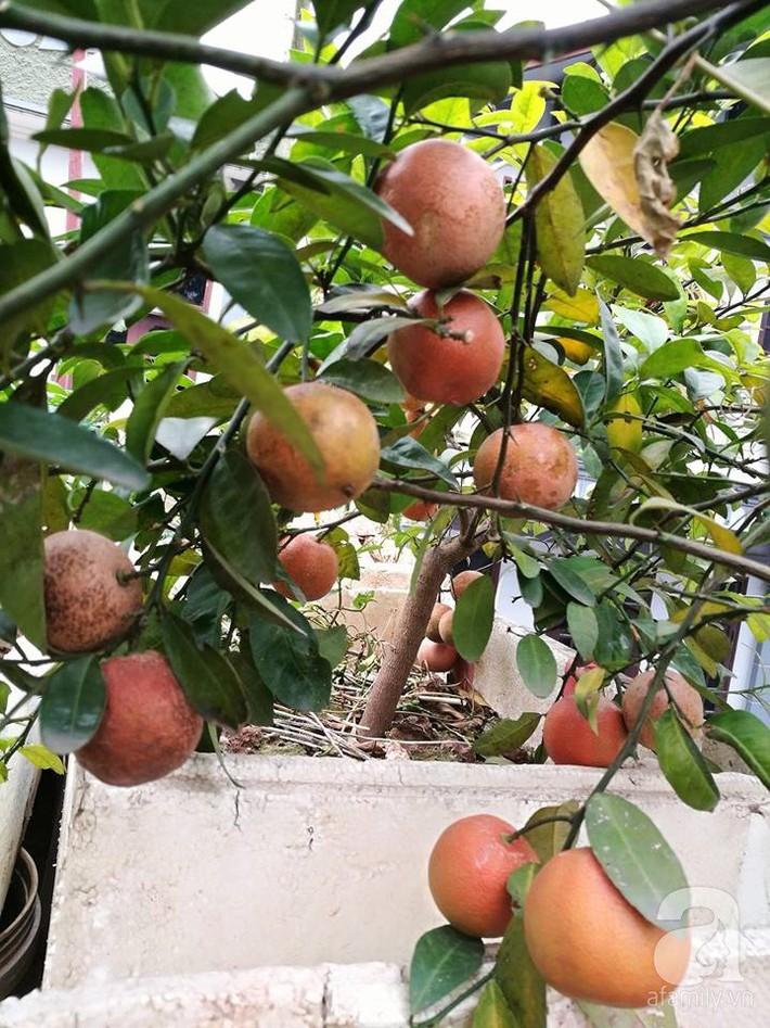 Mẹ đảm ở Hà Nội chia sẻ 12 năm kinh nghiệm trồng rau quả sạch như trang trại trên sân thượng  - Ảnh 8.
