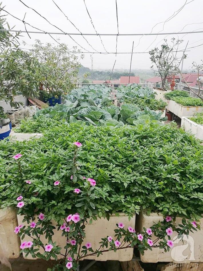 Mẹ đảm ở Hà Nội chia sẻ 12 năm kinh nghiệm trồng rau quả sạch như trang trại trên sân thượng  - Ảnh 1.