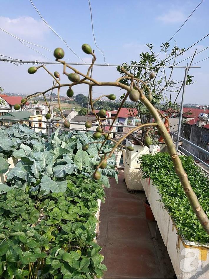 Mẹ đảm ở Hà Nội chia sẻ 12 năm kinh nghiệm trồng rau quả sạch như trang trại trên sân thượng  - Ảnh 2.