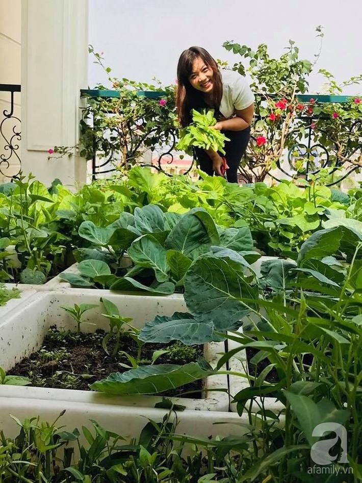 Sân thượng đầy ắp rau quả sạch nhờ bàn tay chăm sóc đảm đang của cô giáo ở Hải Dương - Ảnh 1.