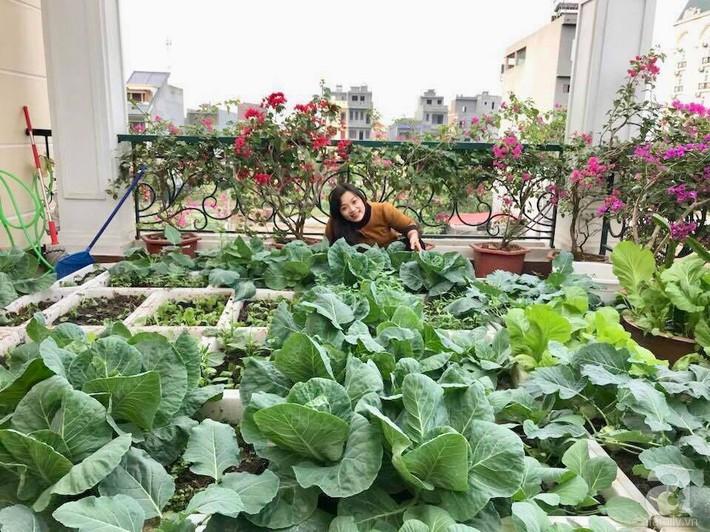Sân thượng đầy ắp rau quả sạch nhờ bàn tay chăm sóc đảm đang của cô giáo ở Hải Dương - Ảnh 5.