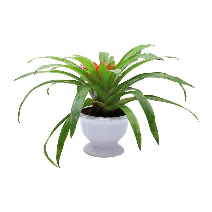 Những loại cây cảnh hút tài lộc nên trồng trong nhà để tiền vào như nước - Ảnh 2.