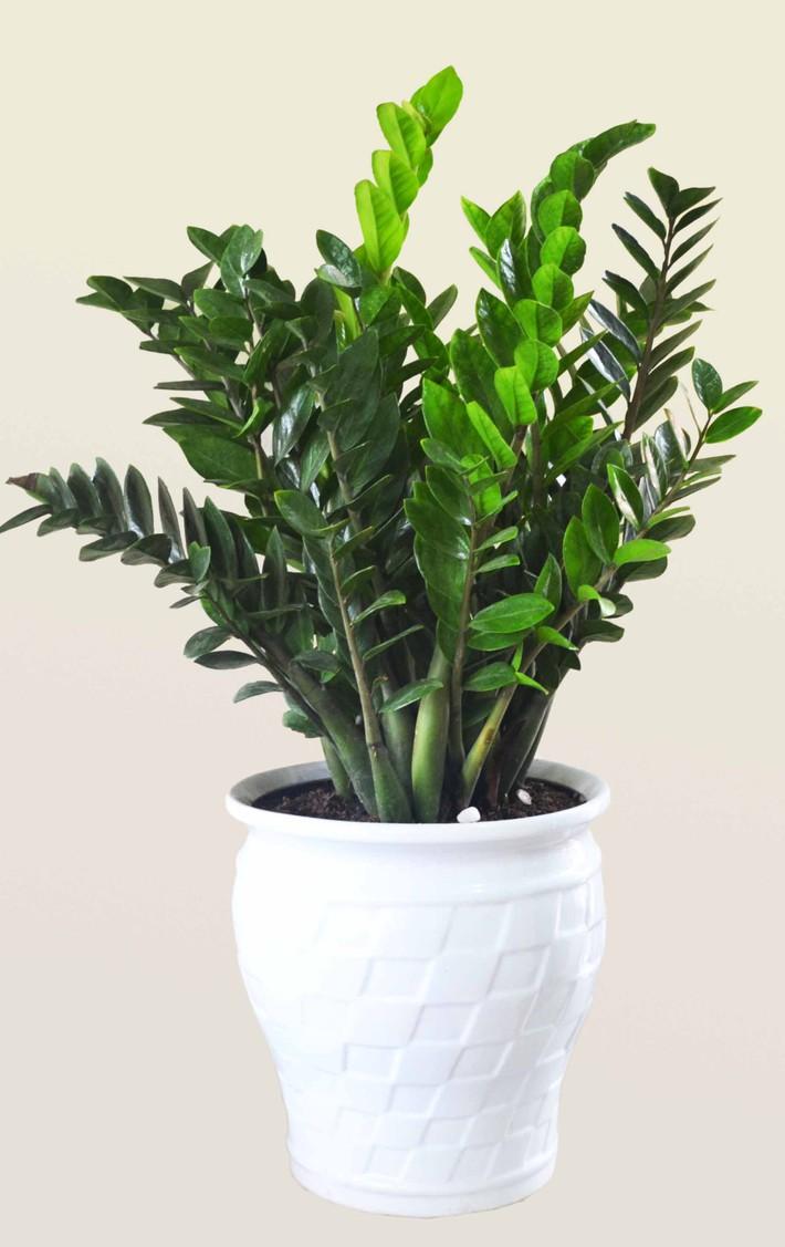 Những loại cây cảnh hút tài lộc nên trồng trong nhà để tiền vào như nước - Ảnh 1.