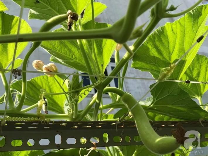 Khu vườn 100m² rau quả gì cũng có của mẹ đảm hai con xinh đẹp ở Sóc Trăng - Ảnh 19.