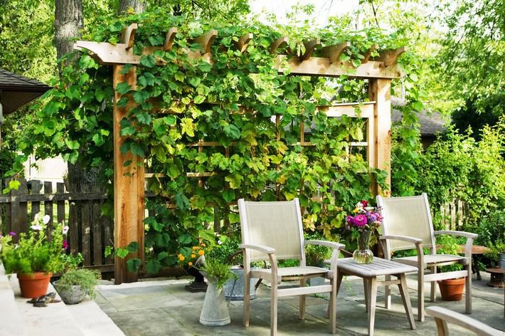 5 ý tưởng để nâng cấp sân vườn nhà bạn trong mùa hè này - Ảnh 1.