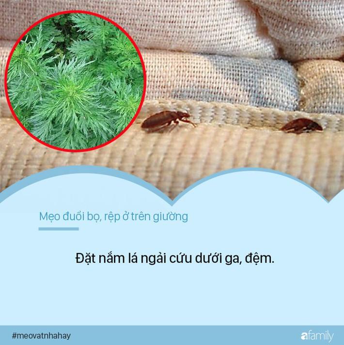 Bọ rệp giường hoành hành ngày mưa ẩm, chỉ cần nguyên liệu này thôi là có thể đánh bay bọn chúng, đặc biệt là số 1 - Ảnh 1.