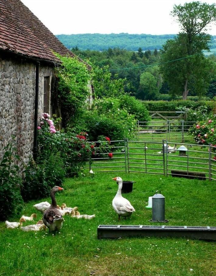 Cuộc sống bình yên, tự tại trong ngôi nhà ngập tràn nắng gió và hương thơm vạn người mơ ước - Ảnh 3.