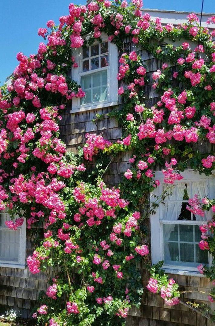 Cuộc sống bình yên, tự tại trong ngôi nhà ngập tràn nắng gió và hương thơm vạn người mơ ước - Ảnh 10.