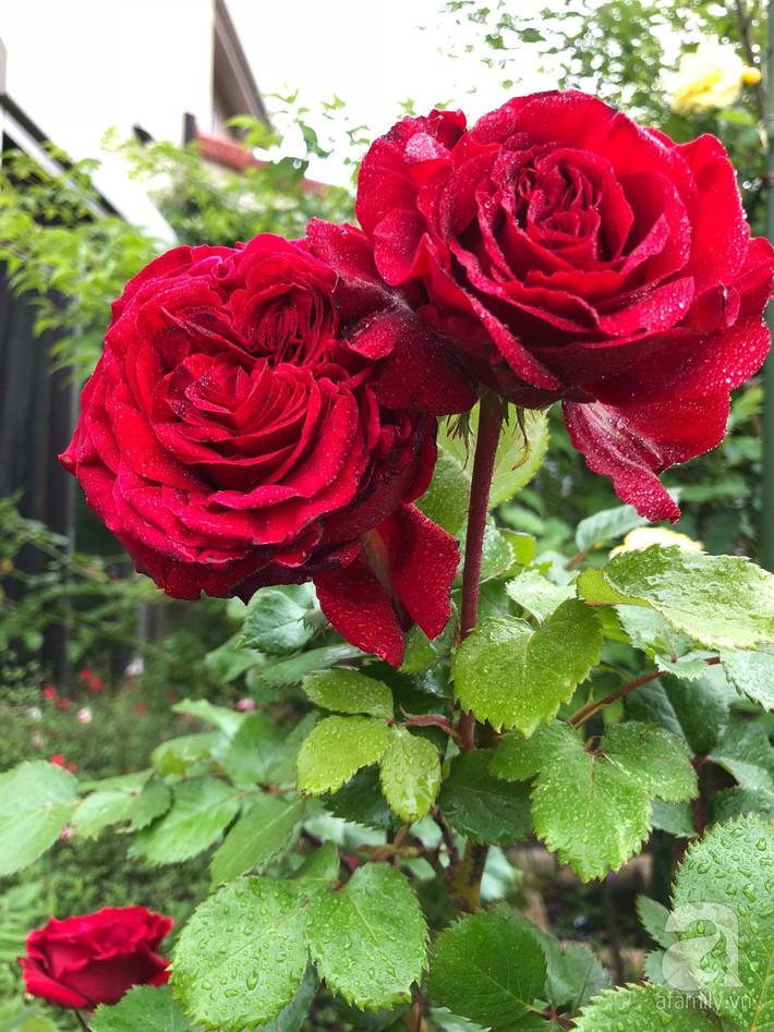 Khu vườn hoa hồng trước nhà đẹp như truyện cổ tích của người đàn ông Việt ở Nhật - Ảnh 20.