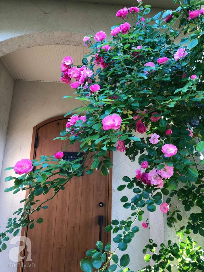 Khu vườn hoa hồng trước nhà đẹp như truyện cổ tích của người đàn ông Việt ở Nhật - Ảnh 19.