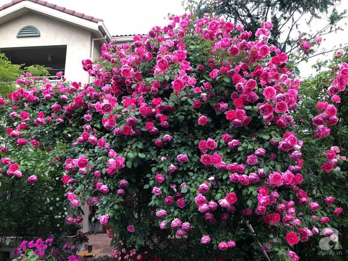 Khu vườn hoa hồng trước nhà đẹp như truyện cổ tích của người đàn ông Việt ở Nhật - Ảnh 11.