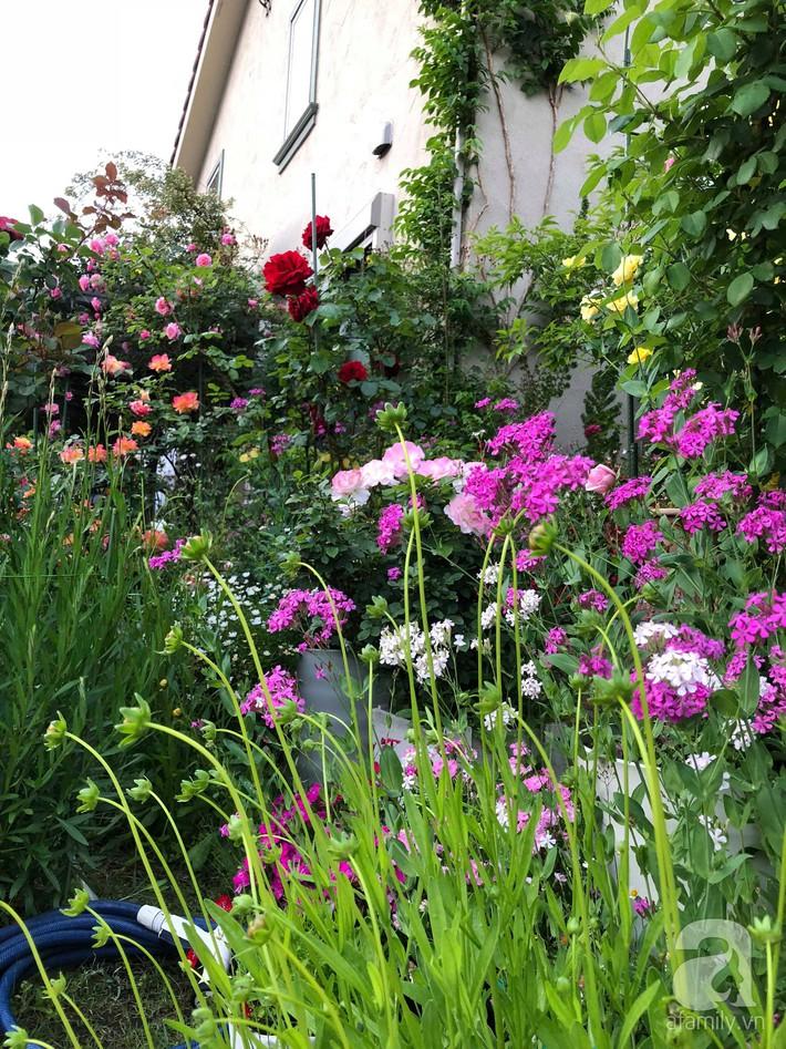 Khu vườn hoa hồng trước nhà đẹp như truyện cổ tích của người đàn ông Việt ở Nhật - Ảnh 17.