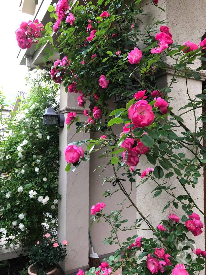 Khu vườn hoa hồng trước nhà đẹp như truyện cổ tích của người đàn ông Việt ở Nhật - Ảnh 10.