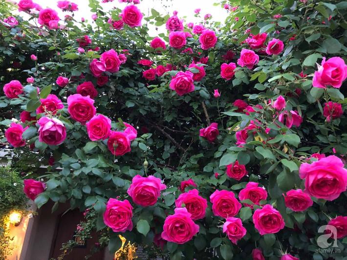 Khu vườn hoa hồng trước nhà đẹp như truyện cổ tích của người đàn ông Việt ở Nhật - Ảnh 8.