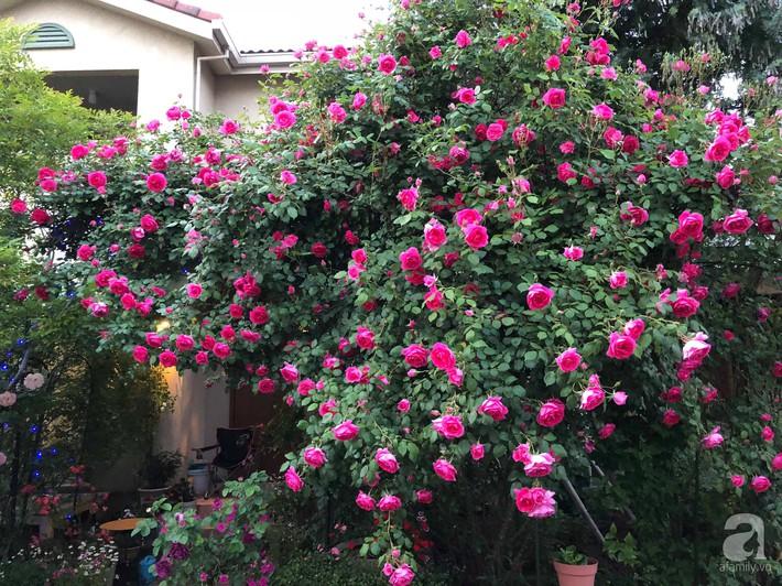 Khu vườn hoa hồng trước nhà đẹp như truyện cổ tích của người đàn ông Việt ở Nhật - Ảnh 4.