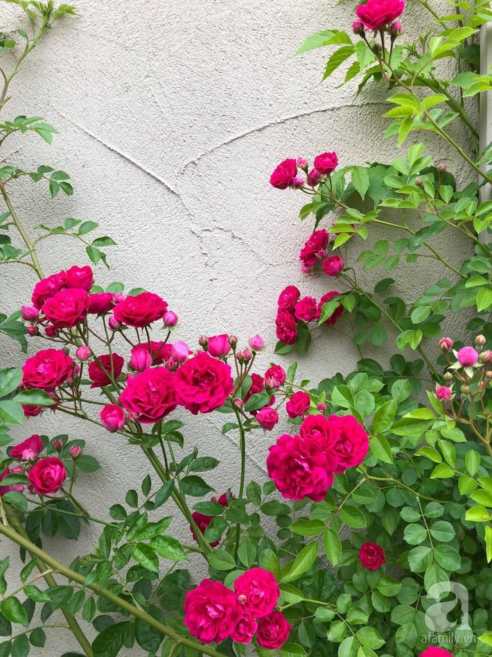 Khu vườn hoa hồng trước nhà đẹp như truyện cổ tích của người đàn ông Việt ở Nhật - Ảnh 14.