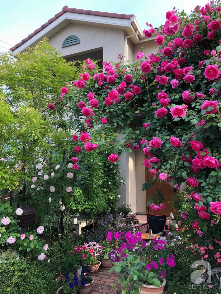 Khu vườn hoa hồng trước nhà đẹp như truyện cổ tích của người đàn ông Việt ở Nhật - Ảnh 2.