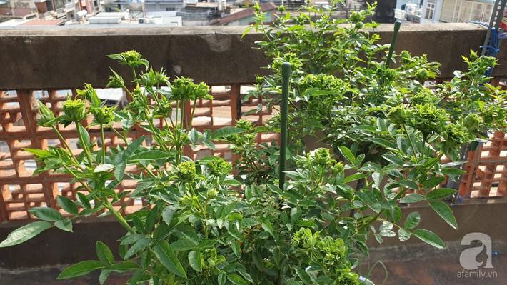 Vườn hồng trên sân thượng rực rỡ sắc màu của chàng trai 8x siêu đảm ở Sài Gòn - Ảnh 23.