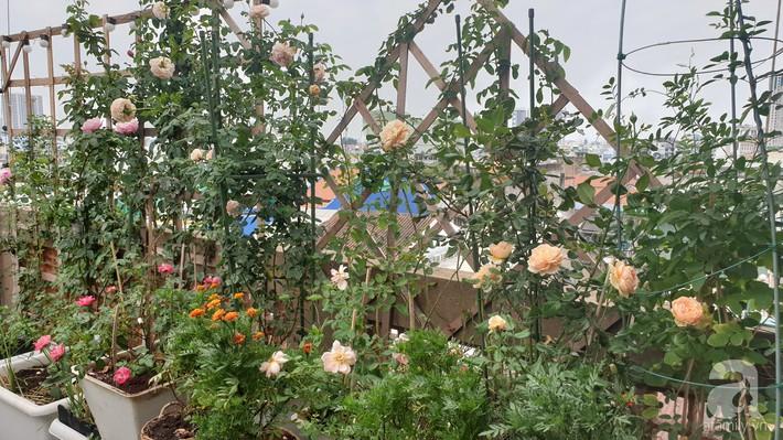 Vườn hồng trên sân thượng rực rỡ sắc màu của chàng trai 8x siêu đảm ở Sài Gòn - Ảnh 21.