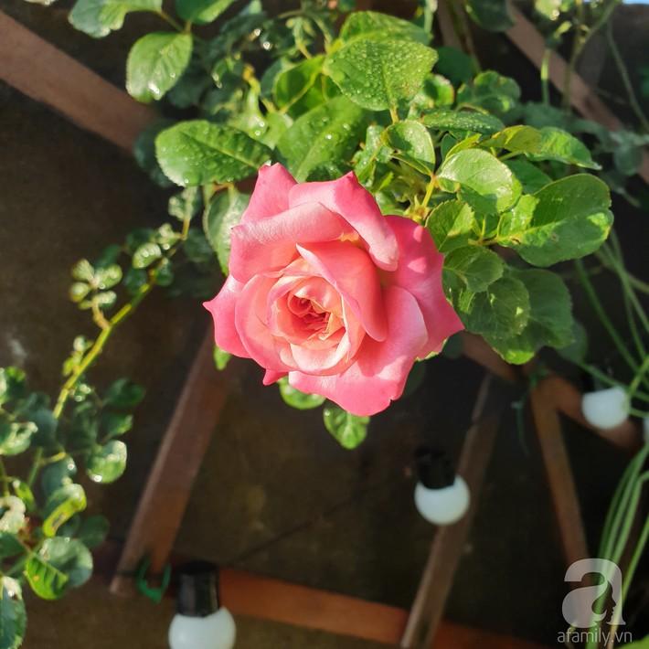 Vườn hồng trên sân thượng rực rỡ sắc màu của chàng trai 8x siêu đảm ở Sài Gòn - Ảnh 20.