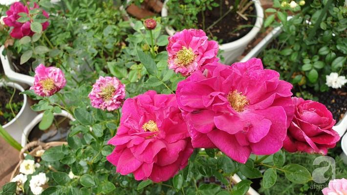 Vườn hồng trên sân thượng rực rỡ sắc màu của chàng trai 8x siêu đảm ở Sài Gòn - Ảnh 18.