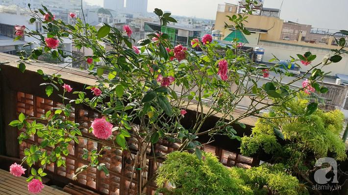 Vườn hồng trên sân thượng rực rỡ sắc màu của chàng trai 8x siêu đảm ở Sài Gòn - Ảnh 4.
