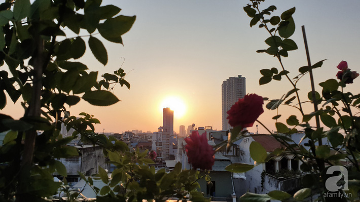 Vườn hồng trên sân thượng rực rỡ sắc màu của chàng trai 8x siêu đảm ở Sài Gòn - Ảnh 2.