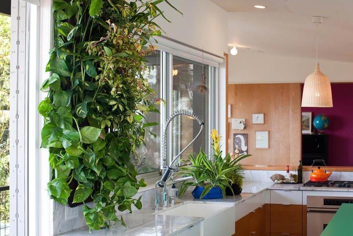 Bí quyết tạo điểm nhấn xanh tươi từ cây xanh trong nhà phố - Ảnh 7.