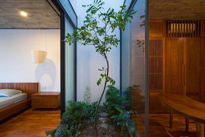 Những loại cây nên trồng ở giếng trời giúp không khí trong lành và tốn ít công chăm sóc - Ảnh 2.