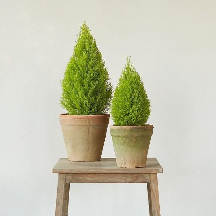 Làm sạch không khí trong nhà bằng cách trồng các loại cây xanh quen thuộc   - Ảnh 5.