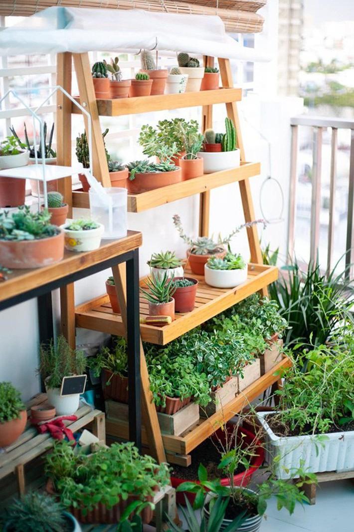 Từ những chậu hoa bị bỏ đi, ca sĩ Phương Vy Idol đã tạo nên khu vườn xanh tốt tại nhà - Ảnh 11.