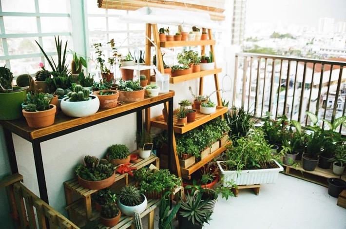 Từ những chậu hoa bị bỏ đi, ca sĩ Phương Vy Idol đã tạo nên khu vườn xanh tốt tại nhà - Ảnh 10.