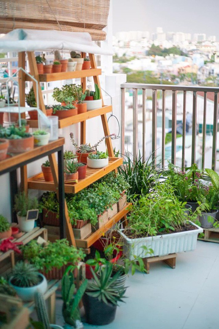 Từ những chậu hoa bị bỏ đi, ca sĩ Phương Vy Idol đã tạo nên khu vườn xanh tốt tại nhà - Ảnh 9.