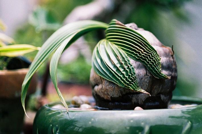 Làm sạch không khí trong nhà bằng cách trồng các loại cây xanh quen thuộc   - Ảnh 3.