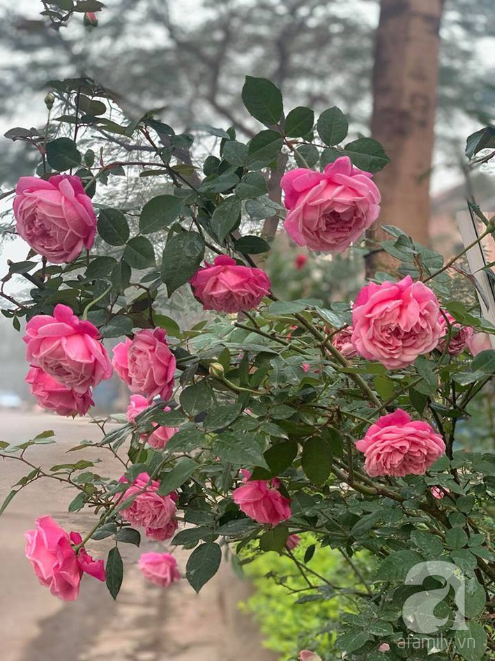 Cuộc sống bình yên của người đàn ông trong ngôi nhà phủ kín hoa hồng ở Hà Nội - Ảnh 24.