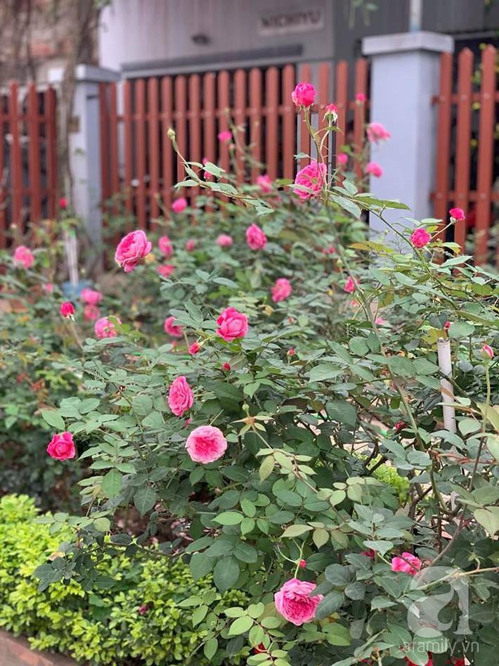 Cuộc sống bình yên của người đàn ông trong ngôi nhà phủ kín hoa hồng ở Hà Nội - Ảnh 23.