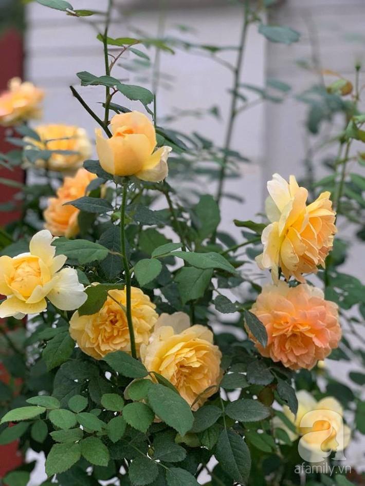 Cuộc sống bình yên của người đàn ông trong ngôi nhà phủ kín hoa hồng ở Hà Nội - Ảnh 22.