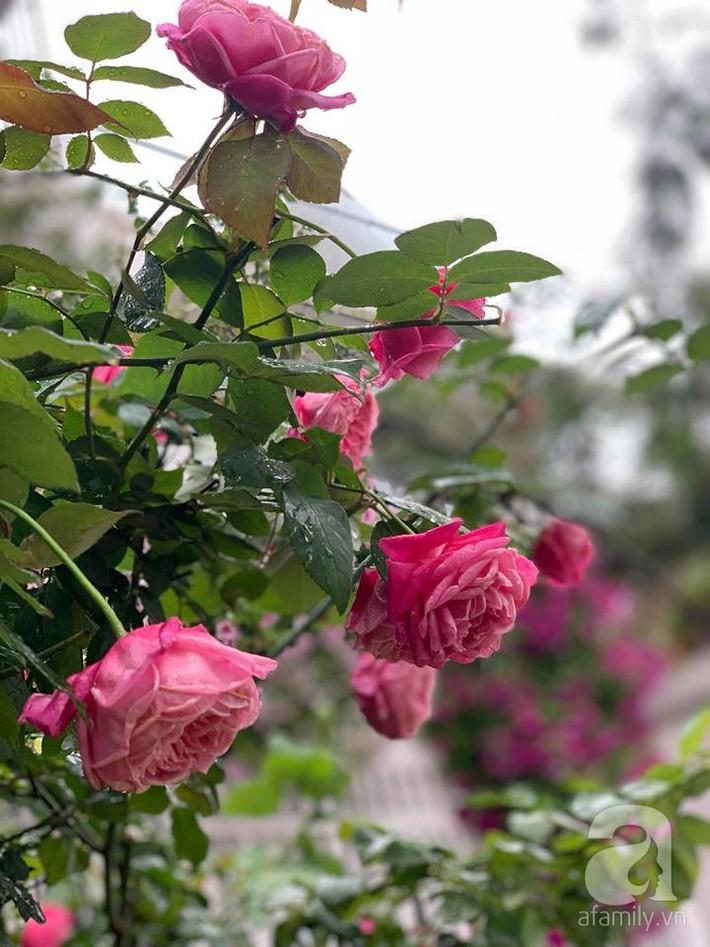 Cuộc sống bình yên của người đàn ông trong ngôi nhà phủ kín hoa hồng ở Hà Nội - Ảnh 21.