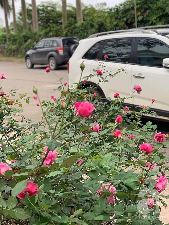 Cuộc sống bình yên của người đàn ông trong ngôi nhà phủ kín hoa hồng ở Hà Nội - Ảnh 19.