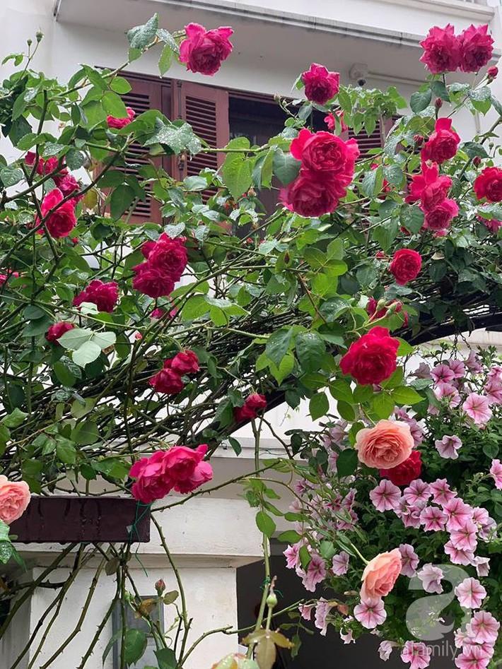 Cuộc sống bình yên của người đàn ông trong ngôi nhà phủ kín hoa hồng ở Hà Nội - Ảnh 17.