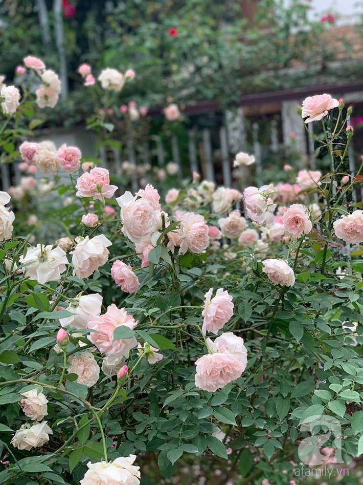 Cuộc sống bình yên của người đàn ông trong ngôi nhà phủ kín hoa hồng ở Hà Nội - Ảnh 5.