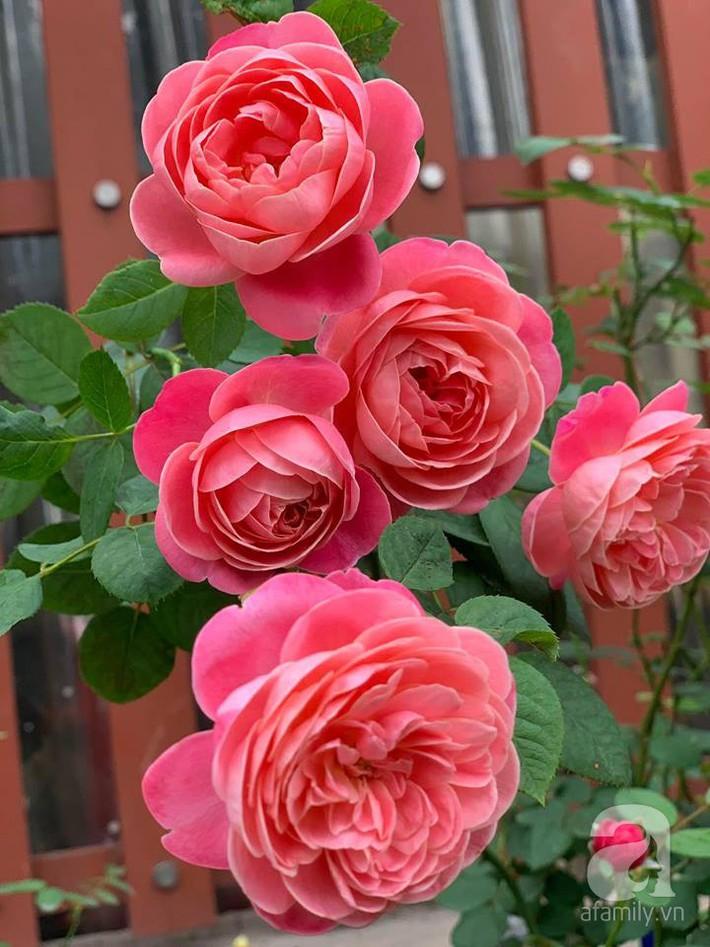 Cuộc sống bình yên của người đàn ông trong ngôi nhà phủ kín hoa hồng ở Hà Nội - Ảnh 10.