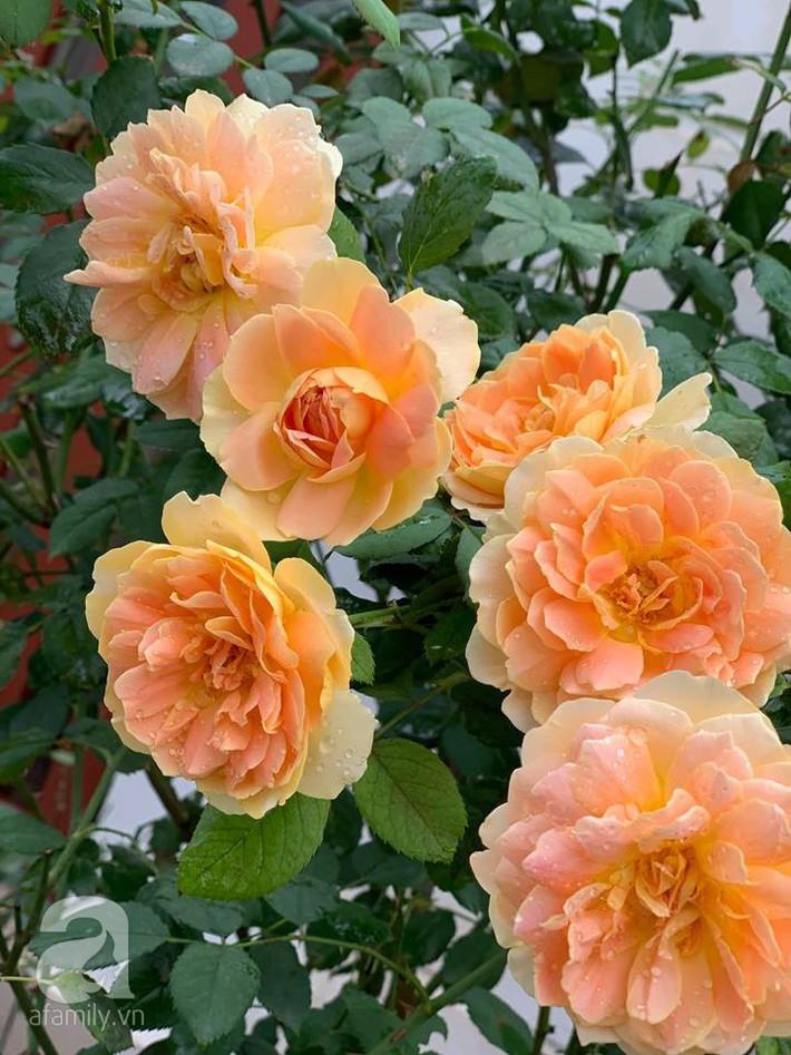 Cuộc sống bình yên của người đàn ông trong ngôi nhà phủ kín hoa hồng ở Hà Nội - Ảnh 9.