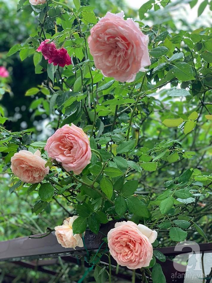 Cuộc sống bình yên của người đàn ông trong ngôi nhà phủ kín hoa hồng ở Hà Nội - Ảnh 6.