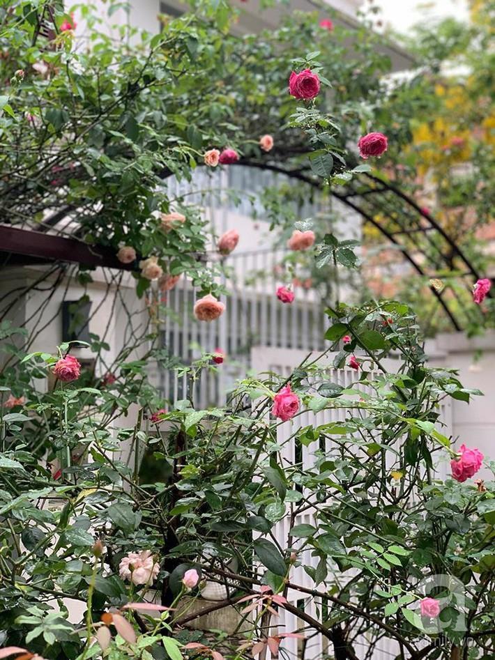 Cuộc sống bình yên của người đàn ông trong ngôi nhà phủ kín hoa hồng ở Hà Nội - Ảnh 2.
